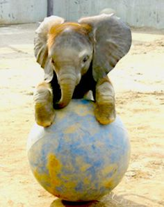 Thanks for following along with An Elephant In The Woods from me, and also this adorable elephant! Image via Pinterest.