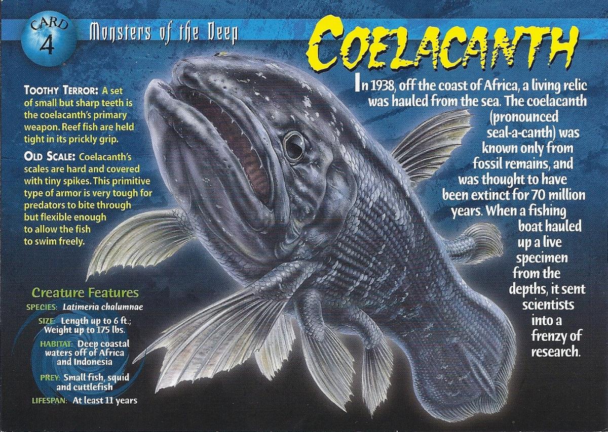 Bildergebnis für Coelacanth