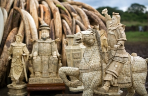 """Ivory statues stand in front of one of around a dozen pyres of ivory, in Nairobi National Park, Kenya Thursday, April 28, 2016. The Kenya Wildlife Service (KWS) has stacked 105 tons of ivory consisting of 16,000 tusks, and 1 ton of rhino horn, from stockpiles around the country, in preparation for it to be torched on Saturday to encourage global efforts to help stop the poaching of elephants and rhinos. (AP Photo/Ben Curtis)"""