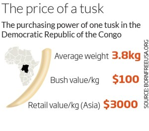 The price of one tusk. Image via New Scientist.