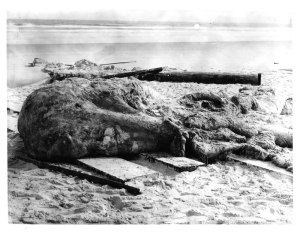 The St. Augustine Monster. Image via Smithsonian.