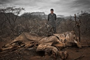 Yao Ming overlooks an elephant carcass in Kenya. Image via New York Times.
